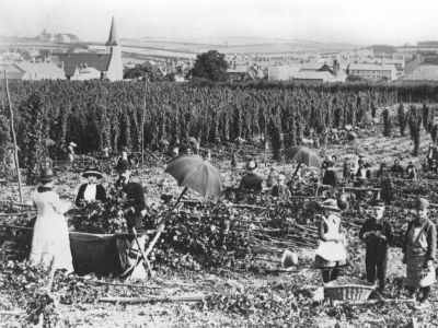 Hop picking in Alton (1880)